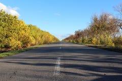 för vägsun för höst rider ut gröna trees yellow Arkivbild