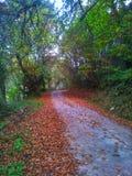 för vägsun för höst rider ut gröna trees yellow royaltyfria foton