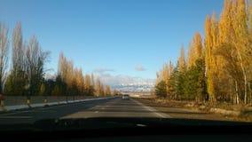 för vägsun för höst rider ut gröna trees yellow Arkivfoton