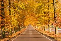 för vägsun för höst rider ut gröna trees yellow Royaltyfri Foto