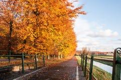 för vägsun för höst rider ut gröna trees yellow Arkivfoto