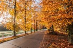 för vägsun för höst rider ut gröna trees yellow Royaltyfri Bild