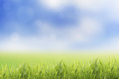 För vår eller abstrakt naturbakgrund för sommar med gräsfältet Arkivfoto