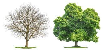 För vårsommar för träd samling isolerad kontur royaltyfri bild