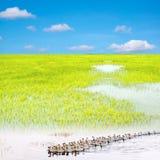 För våtmarkbakgrund för blå sky bilden Arkivfoto