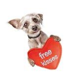 För valentindag för hund fria kyssar Royaltyfri Foto