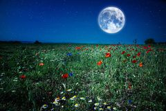 För vallmofält för lös blomma äng på natten med månen och stjärnor royaltyfri foto