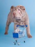 för valpsharpei för vagn tom shopping Royaltyfria Bilder