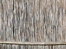 För vassväxt för brunt torrt staket Fotografering för Bildbyråer