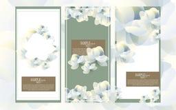 För vattenfärgblomma för vektor abstrakt uppsättning för design för mall, jasmin Royaltyfri Fotografi