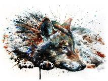 För vattenfärgmålning för varg rovdjurs- teckning Arkivbild