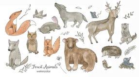 För vattenfärgtecknad film för hand djur se för utdraget klotter royaltyfri illustrationer
