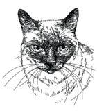 För vektorhand för katt head illustration för teckning Arkivbilder