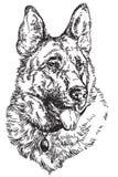 För vektorhand för tysk herde illustration för teckning Royaltyfri Foto