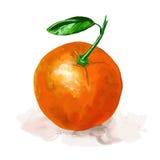 För vektorillustration för frukt dragen orange hand Royaltyfri Fotografi