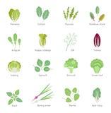 För vektorlägenhet för lövrika grönsaker uppsättning för symboler vektor illustrationer