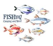 För vektorlogo för ny fisk mall för design Skaldjur Royaltyfri Foto