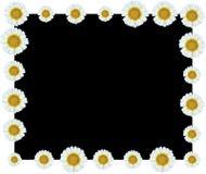 För vinrankagräns för vit blomma bakgrund för svart Arkivbilder