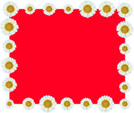 För vinrankagräns för vit blomma röd bakgrund Arkivbild
