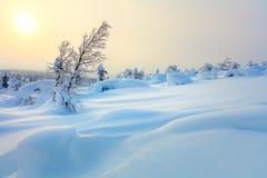 För vintersolnedgång för stor snö nordligt landskap royaltyfria bilder