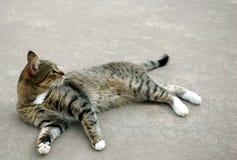 förargad katt Royaltyfri Foto