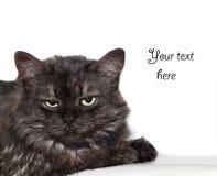 förargad katt Arkivbilder
