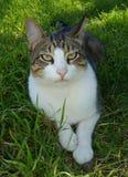 förargad katt Arkivfoto