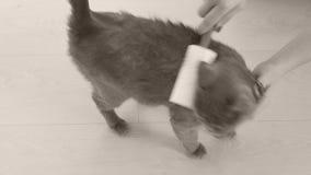 Förbandsgasrulle och katt arkivfilmer