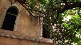 Förbaskat gammalt hus Ett stort träd har fullvuxet nära ett förstört och övergett hus arkivfilmer