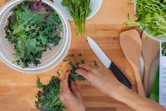 Förbereda organisk grönsakgrönkål Arkivbild