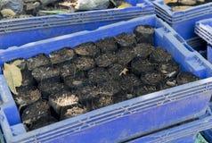 Förbereda påsar av jord för att cultiveds i det plast- magasinet Royaltyfria Bilder