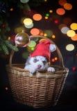 Förbereda sig för ankomsten av det nya året Fotografering för Bildbyråer
