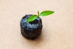 Förbereda sig för odlingen av växter i trädgården grön grodd kom fjädern Grogrund Dekorativ etikett för design hydroponics Royaltyfri Fotografi