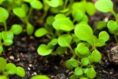 Förbereda sig för odlingen av växter i trädgården grön grodd kom fjädern Grogrund Dekorativ etikett för design hydroponics Arkivfoto