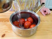 Förbereda tomater. Arkivbilder