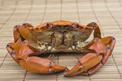 förberedd krabba Arkivfoto