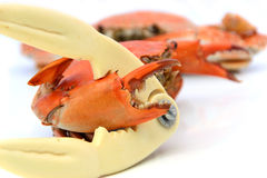 Förberedda skaldjur, krabbasmällare och kokade krabbor Arkivfoto
