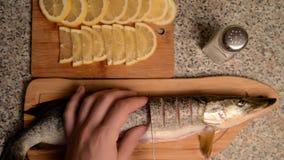 Förberedelse av fisken med citronen i olja arkivfilmer