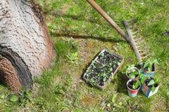 Förberedelse av plantor för att plantera Arkivbild