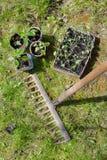 Förberedelse av plantor för att plantera Fotografering för Bildbyråer