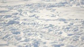 Förberedelsen för vinterparaglidingkonkurrens på en djupfryst sjö nära staden parkerar stock video