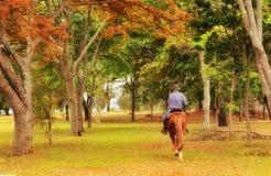 Förbindelsen mellan en man och en häst arkivfoto