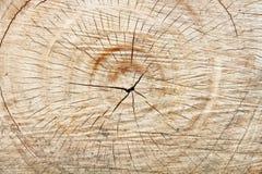 Förbinder av träd. Arkivbilder