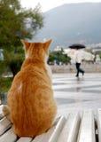 Förbipasserande under ett paraply Royaltyfria Bilder