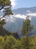 Förbise ett skogsbevuxet berg Arkivfoton