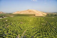 Förbise sikt av orange träd på citronlilla viken, USA Arkivfoton