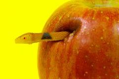 förbjuden frukt Royaltyfri Bild