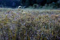 Förbluffa ängen nära en sjö i skogen royaltyfri fotografi