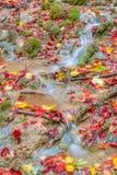 Förbluffa Autumn Forest Creek Arkivfoto