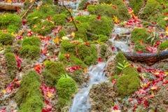 Förbluffa Autumn Forest Creek Arkivbilder